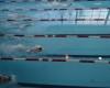 Соревнования по плаванию в зачет спартакиады среди старшего возраста
